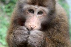 自然生態猿猴区