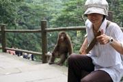猿とワタシ