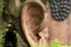 楽山大仏の耳