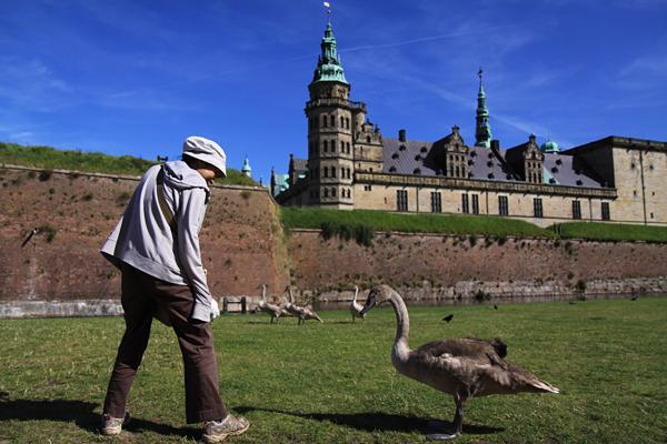 クロンボー城と白鳥と1号