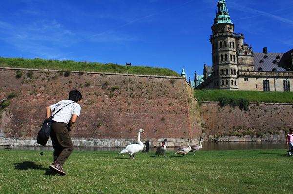 クロンボー城と白鳥と2号