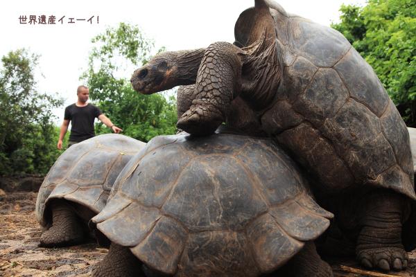 ガラパゴスゾウガメ(Giant Tortoise )