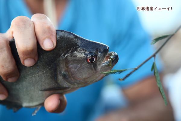 ピラニア釣り